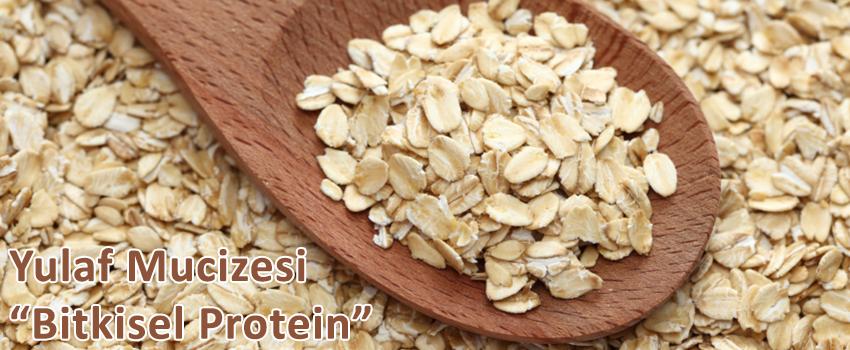 yulaf-mucizesi-bitkisel-protein