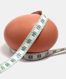 yumurta-hakkinda-hersey-001