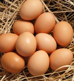 yumurta-hakkinda-hersey-002